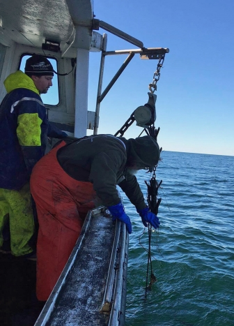 Fishing for Derelict Gear in Cape Cod Bay