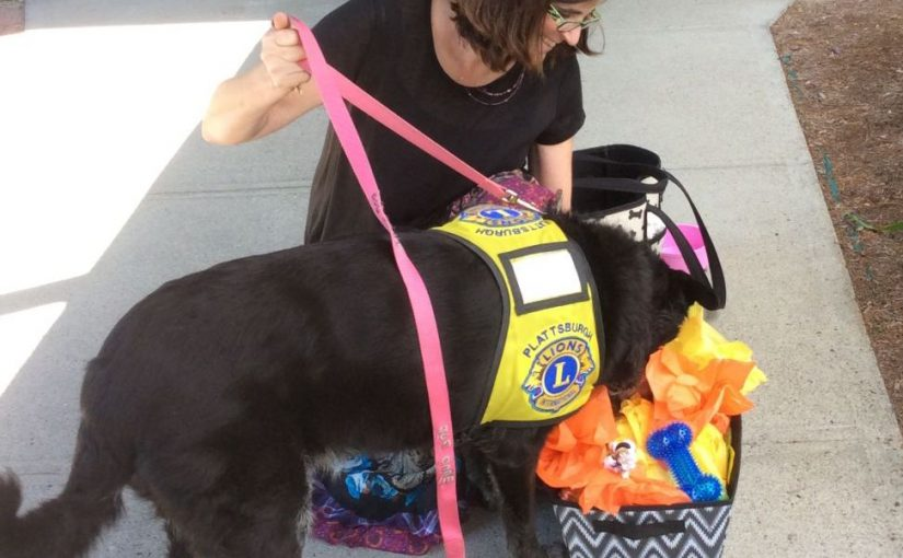 Blind Pup Insights: June 29, 2017