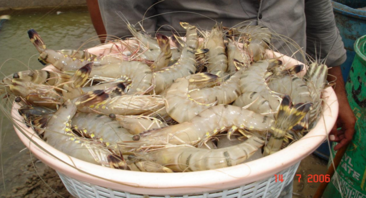 Trade insights: India's November shrimp exports up 41%